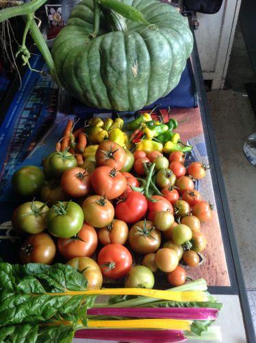 Wednesday's harvest