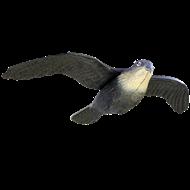 Hanging Hawk