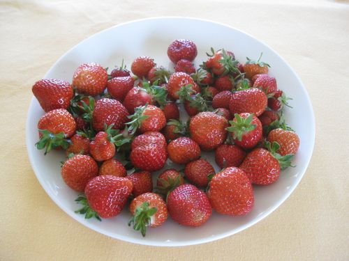 First Strawberries for 2016/2017
