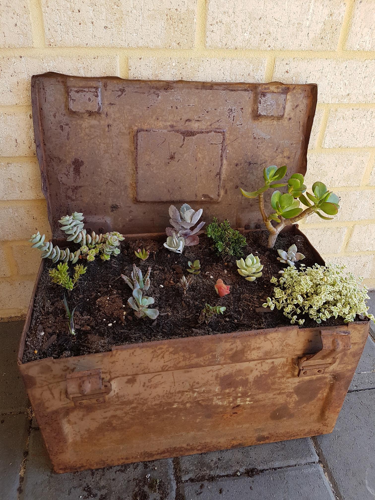 succulent toolbox.jpg