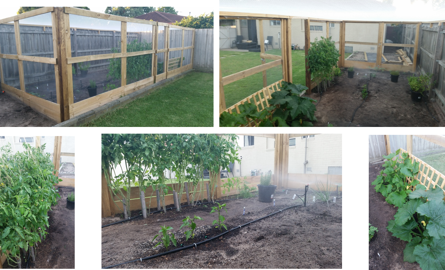 diy walk-in garden enclosure  u0026 irrigatio
