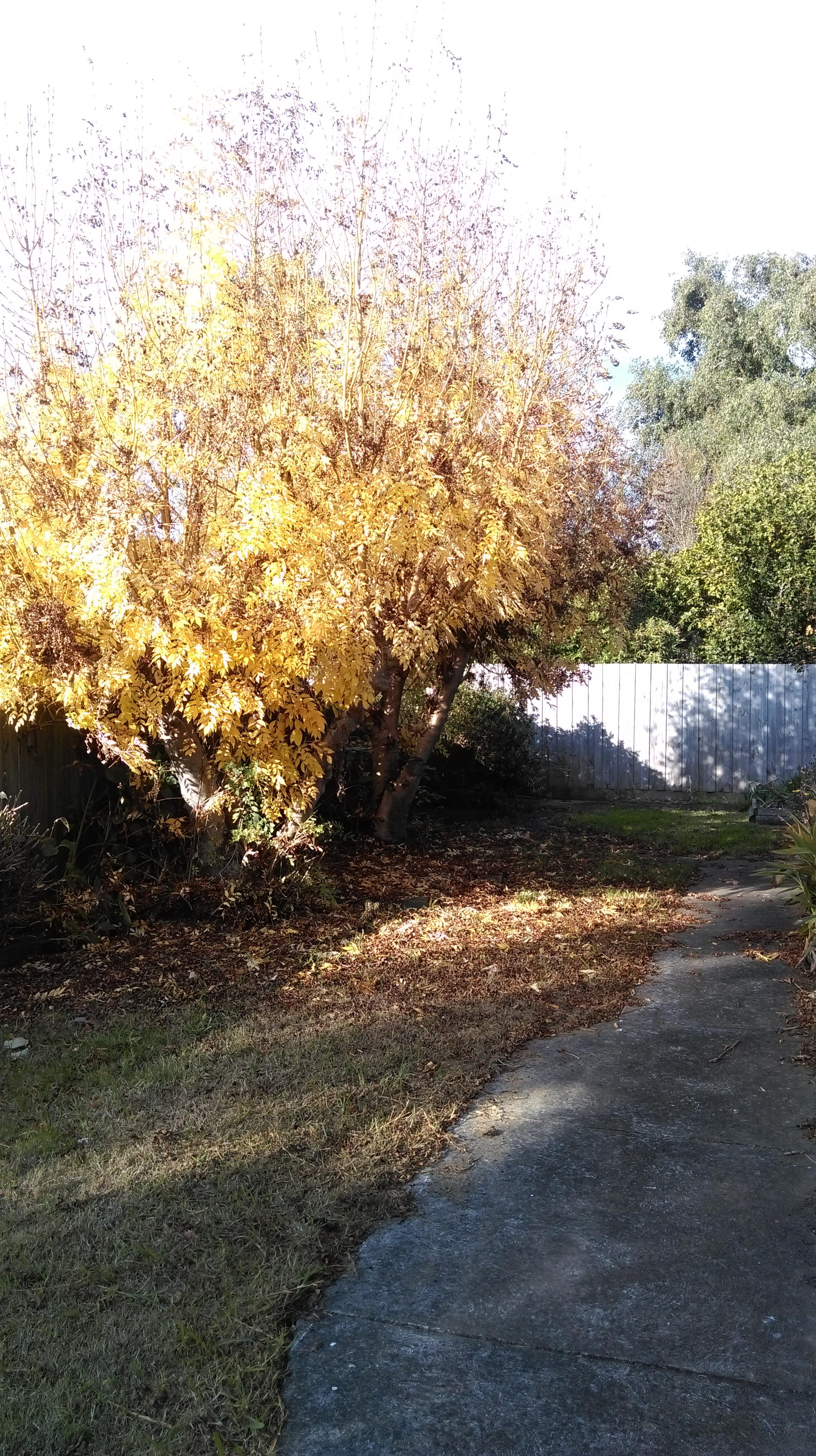 Treefail4.jpg