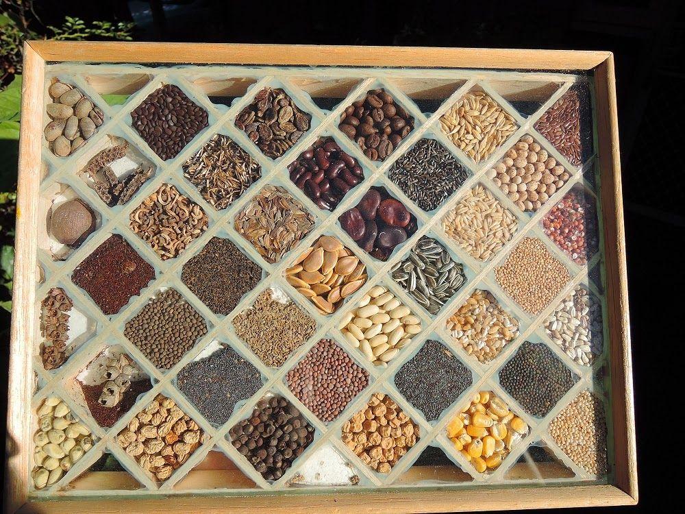 seed box from balsa wood