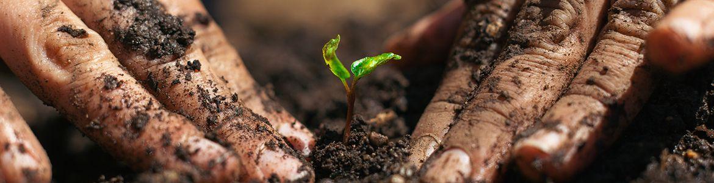 PlantSeedlingWorkshop.jpg
