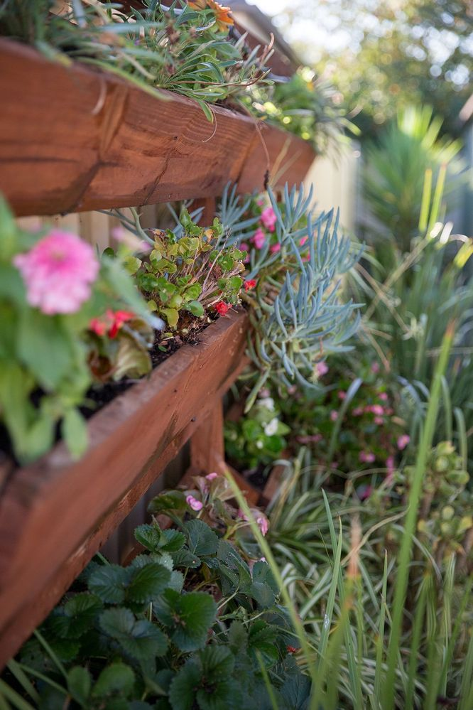 Garden1.jpg