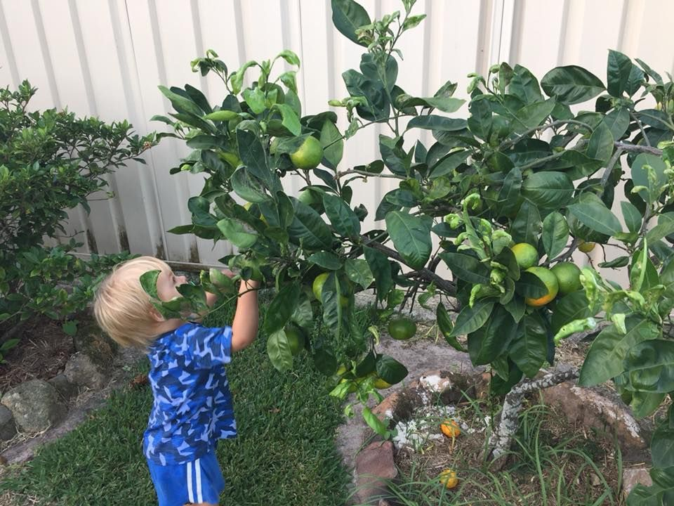 Our little greenthumb checking on his fruit