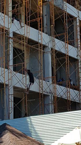 scaffold2.jpg