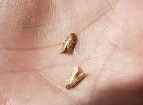 moths.PNG