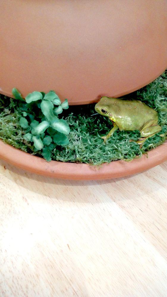 1 Frog Pot.jpg