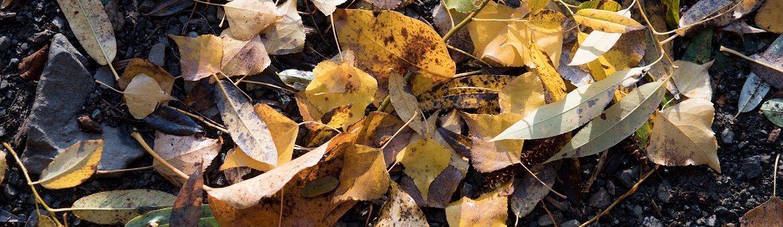 Fall_Leaves_(232874725).jpeg