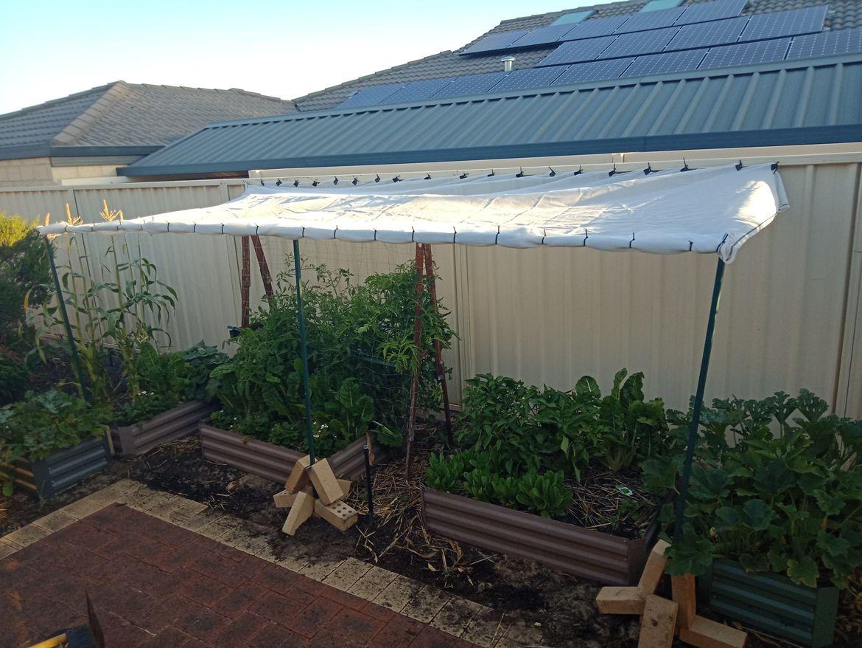 Garden with shadecloth.jpg